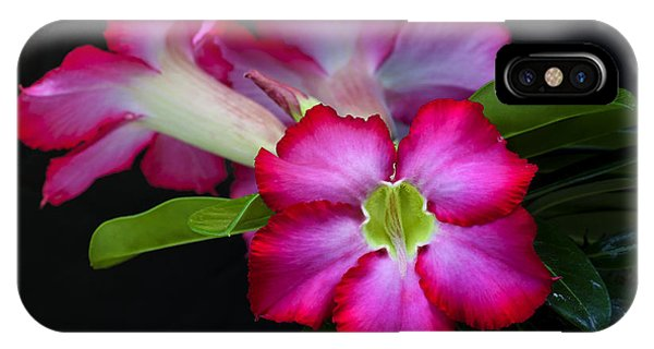 IPhone Case featuring the photograph Red Tropical Flower by Ken Barrett