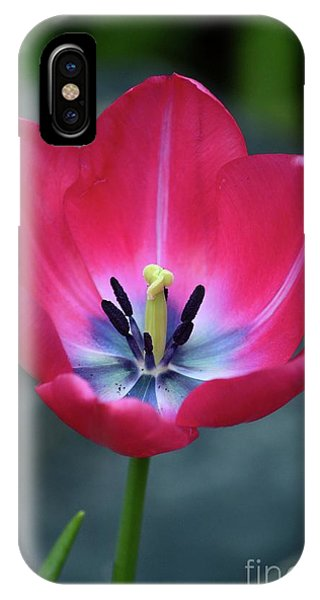 Red Tulip Blossom With Stamen And Petals And Pistil IPhone Case