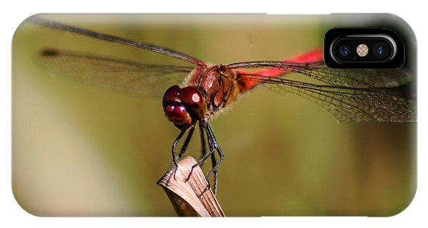 Red Dragonfly iPhone Cases (Page #6 of 22) | Fine Art America