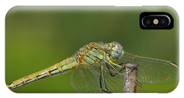 Red-veined Darter Dragonfly IPhone Case