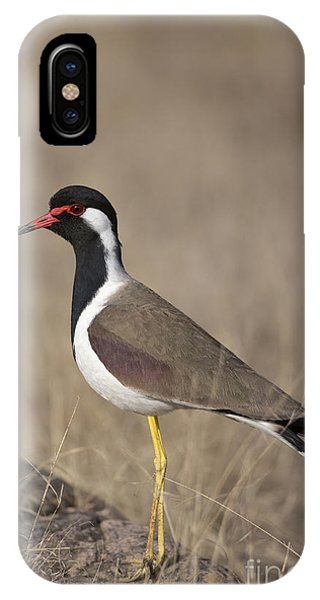 Red-wattled Lapwing IPhone Case