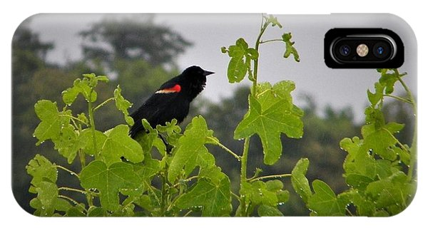 Red Winged Blackbird In The Rain IPhone Case