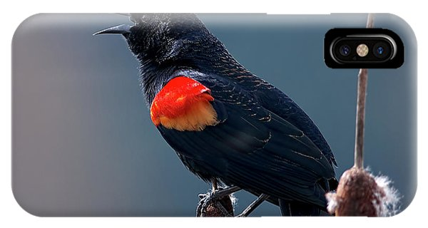 Red-winged Blackbird Singing IPhone Case
