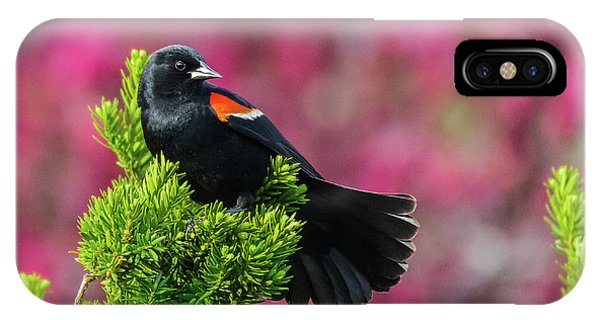 Red Winged Blackbird With Crabapple Blossoms IPhone Case