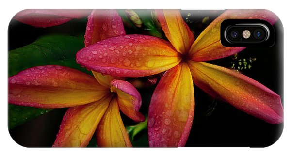 Red/yellow Plumeria In Bloom IPhone Case