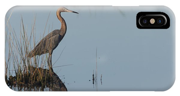 Reddish Egret And Reflection In The Morning Light IPhone Case