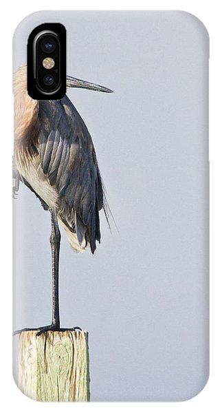 Reddish Egret On Piling IPhone Case