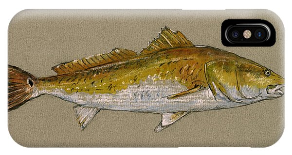 Drawing iPhone Case - Redfish Painting  by Juan  Bosco
