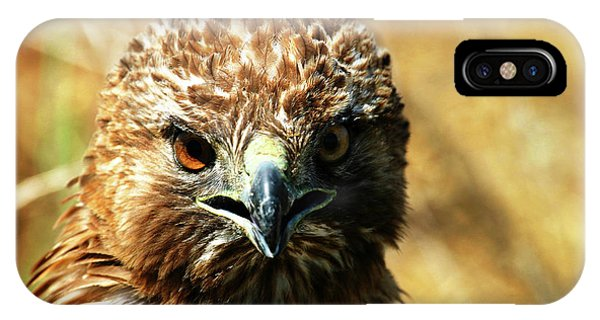 Redtail Hawk IPhone Case