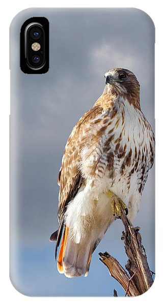 Red Tail Hawk iPhone Case - Redtail Portrait by Bill Wakeley