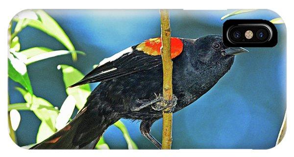 Redwing Blackbird IPhone Case