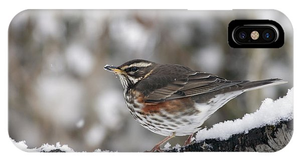 Redwing Perched On A Snowy Branch IPhone Case