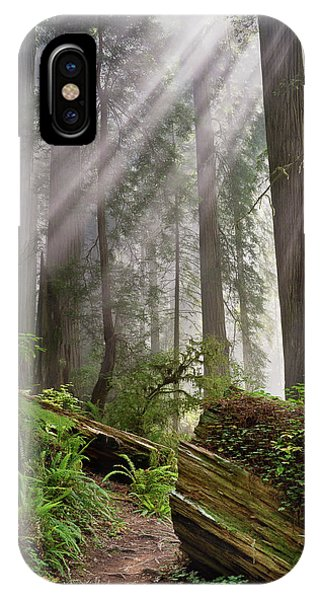 Redwood Light IPhone Case