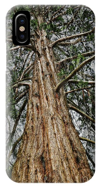 Redwood Reaches For The Sky IPhone Case