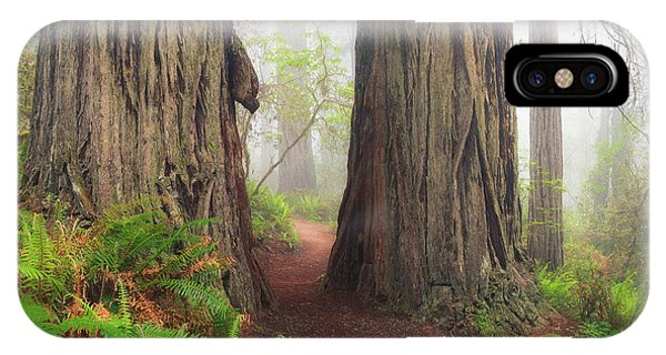 Redwood Trail IPhone Case