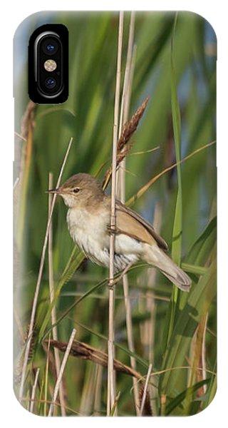 Reed Warbler IPhone Case