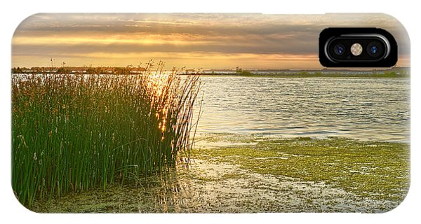 Reeds In The Sunset IPhone Case