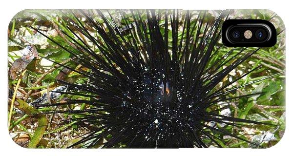 Reef Life - Sea Urchin 1 IPhone Case