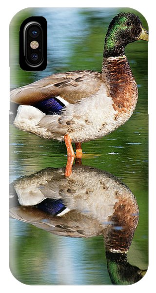 Mallard iPhone Case - Reflection by Patrick Campbell