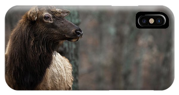 IPhone Case featuring the photograph Regal by Andrea Silies