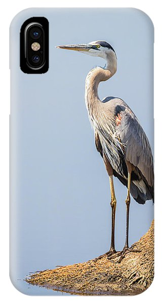 Regal Great Blue Heron IPhone Case