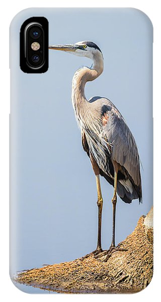 Regal Great Blue Heron IPhone Case