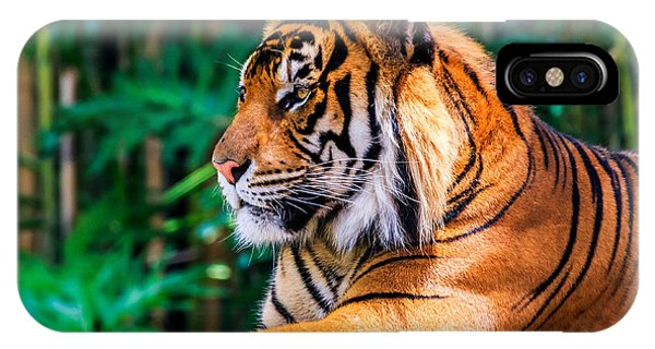 Regal Tiger IPhone Case