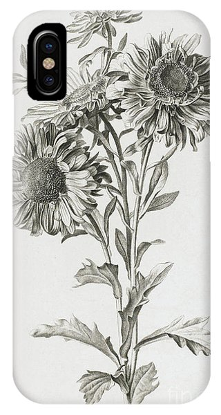 Flora iPhone Case - Reine-marguerite by Gerard van Spaendonck