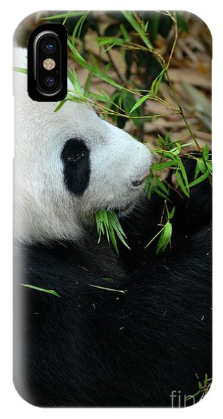 Relaxed Panda Bear Eats With Green Leaves In Mouth IPhone Case