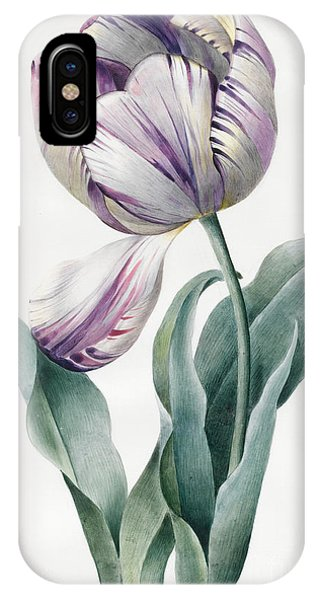 Flora iPhone Case - Rembrandt Tulip by Louise D'Orleans