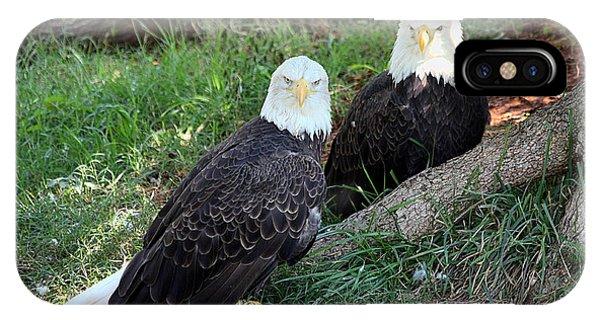 Resting Bald Eagles IPhone Case