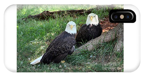 Resting Bald Eagles IPhone Case