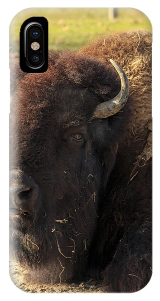 Resting Buffalo IPhone Case