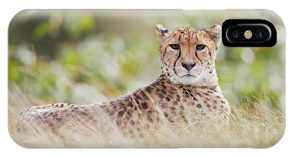 IPhone Case featuring the photograph Resting Cheetah by Nick Biemans