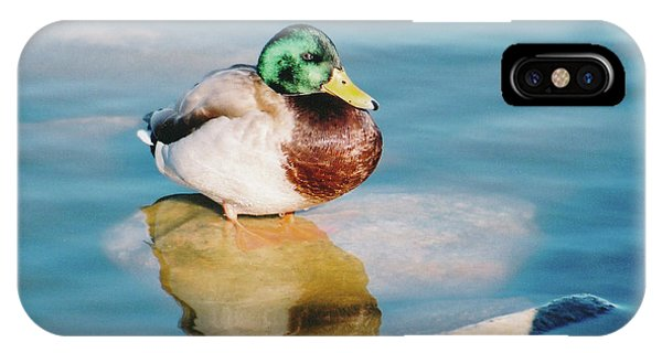 Resting Mallard IPhone Case