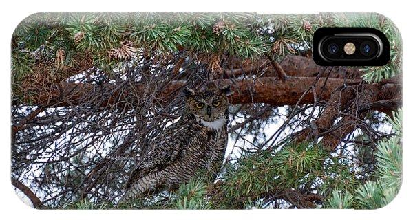 Resting Owl IPhone Case