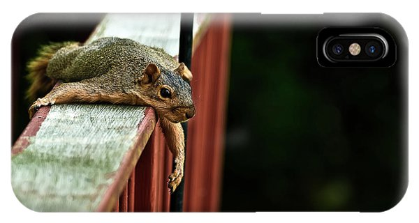 Resting Squirrel IPhone Case