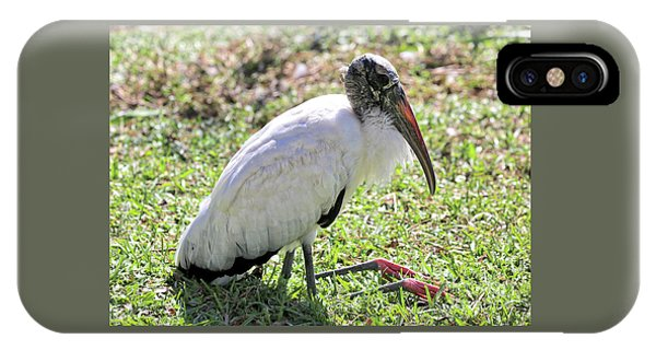 Resting Wood Stork IPhone Case