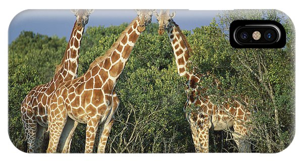 East Africa iPhone Case - Reticulated Giraffe Trio by Kevin Schafer