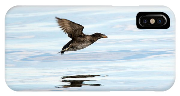 Auklets iPhone Case - Rhinoceros Auklet Reflection by Mike Dawson