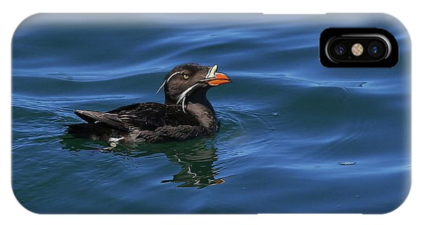 Auklets iPhone Case - Rhinocerous by BYETPhotography