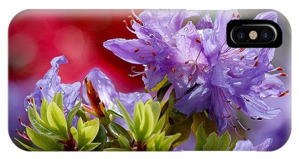 Rhododendron Bluebird IPhone Case