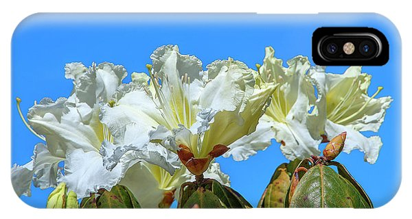 Rhododendron Ciliicalyx Dthn0213 IPhone Case