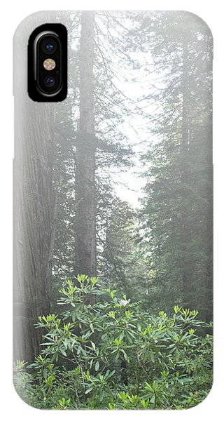 Rhododendrons In The Fog IPhone Case