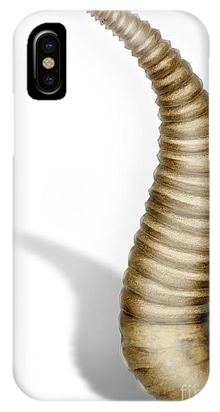 Ribbon Leech Hirundinea Erpobdellidae - Igle - Juotikkaat - Egel IPhone Case