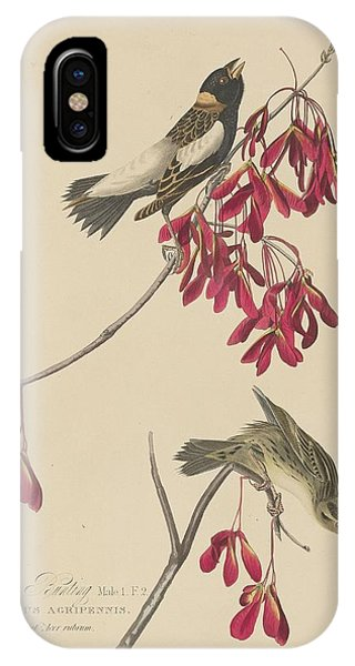 Bunting iPhone Case - Rice Bunting by Dreyer Wildlife Print Collections