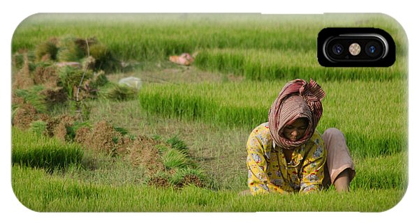 Rice Field Worker Harvests Rice In Green Field In Southeast Asia IPhone Case
