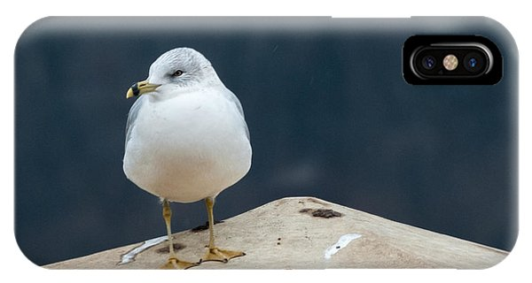 Ring Bill IPhone Case