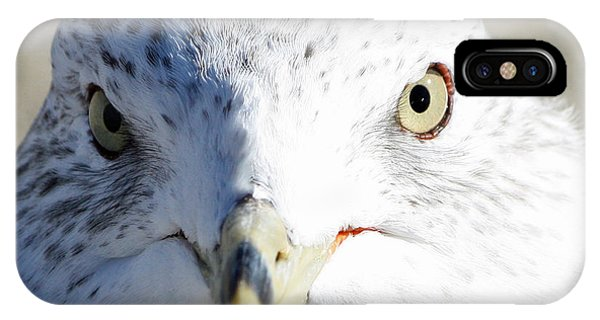 Ring Billed Gull IPhone Case
