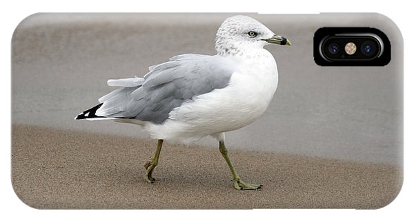 IPhone Case featuring the photograph Ring Billed Gull by Jackson Pearson